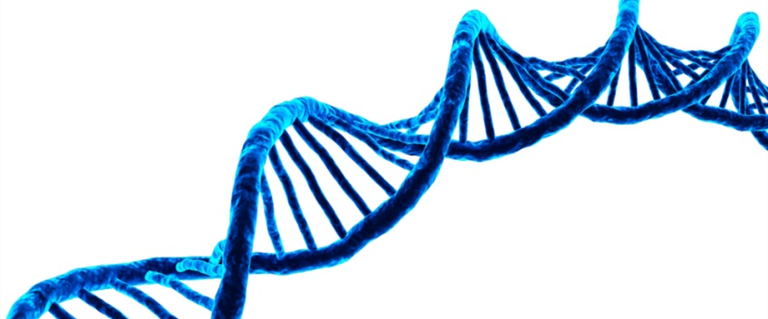 DNA in Italia